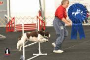 Nationals - Agility